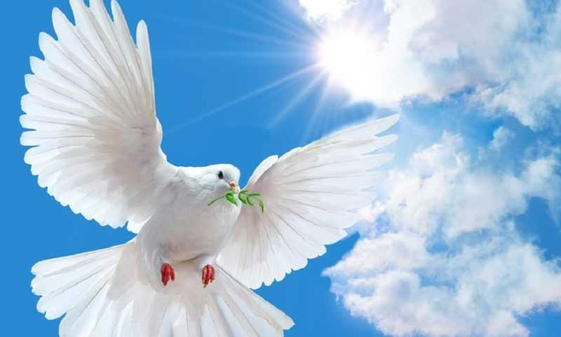 Приглашаем на праздничную программу «Помним сердцем…»