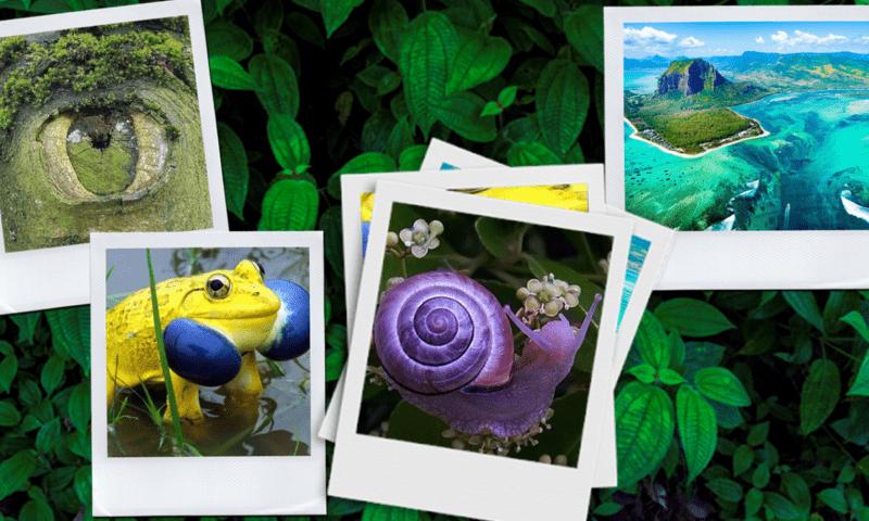 Онлайн-обзор «Фантазии природы»