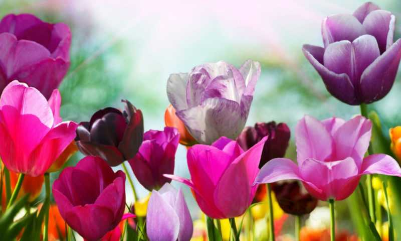 Цветов красотою сердце взято в плен